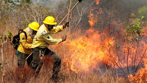 60 brigadistas atuam no combate ao incêndio. Foto: Vinícius Mendonça/Ibama