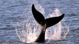 baleias2