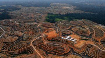 desmatamentodamazonia2