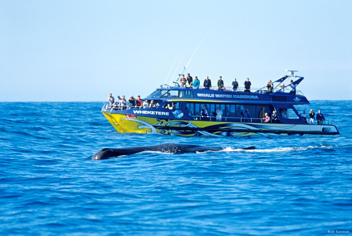 whale-watch-canterbury-credito-rob-suisted