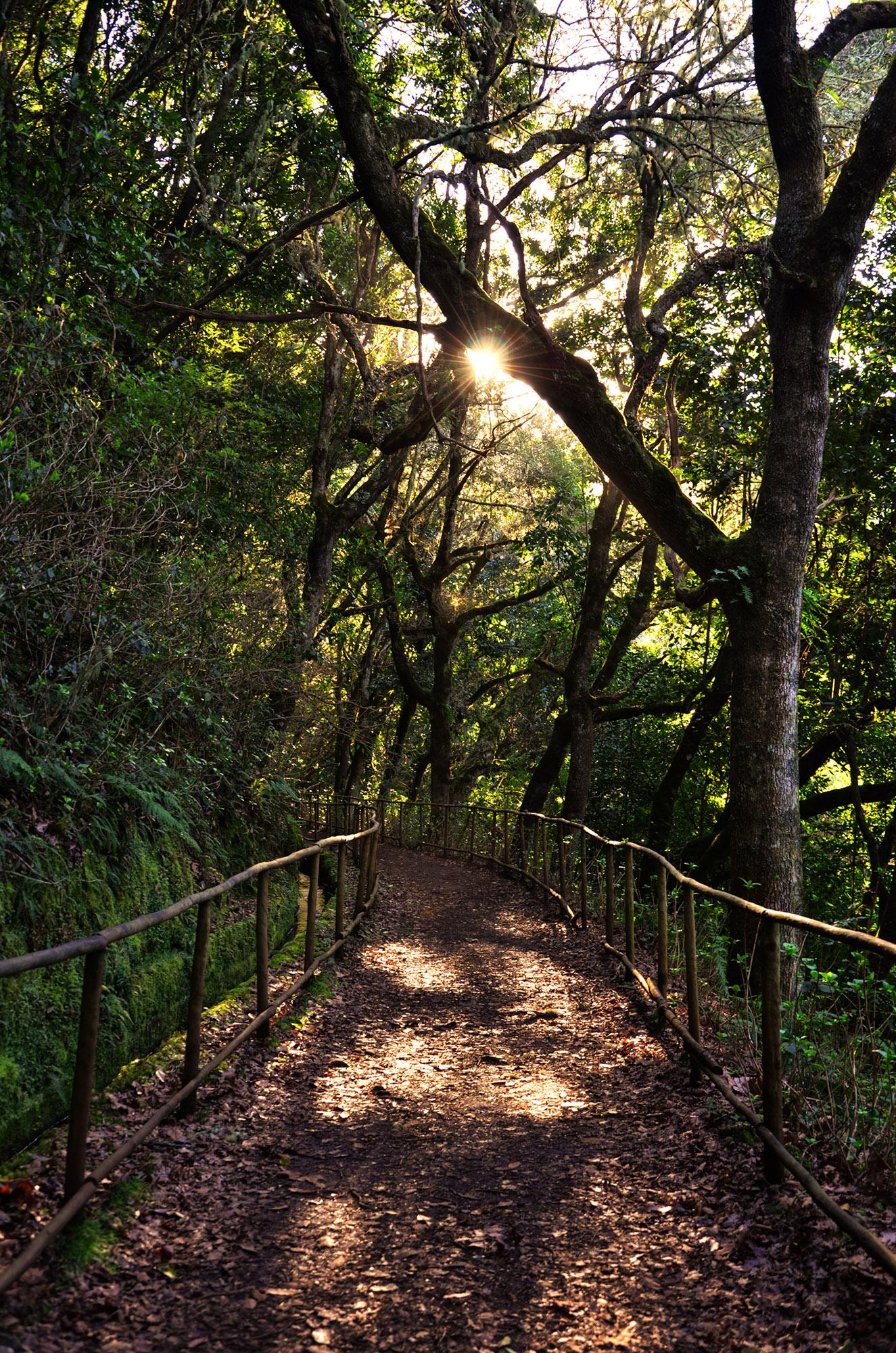 arquipelago-da-madeira-trilha
